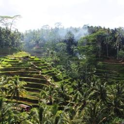Bali – Ubud